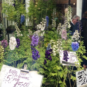 Variety of Delphiniums